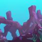 Red Coral (mini)