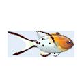 Lyretail Hogfish (1).png