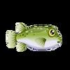 Pufferfish (1)