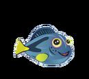Blue Hippo Tang
