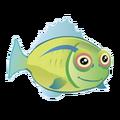 Hawaiian Hogfish (2).png