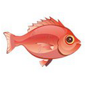 Red Snapper (1).png