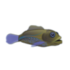 Blue Spot Grouper (1)