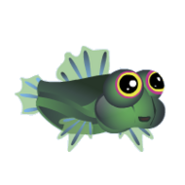 Scooter Blenny (2)