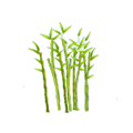 Bamboo.png