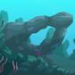 Green Coral (mini).png