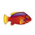 Flame Hawkfish (1).png