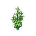 Green Kelp.png