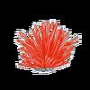 Red Gracillaria