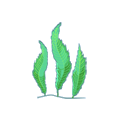 Feather Caulerpa.png