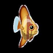 Orbiculate Batfish (2)