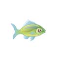 Hawaiian Hogfish (1).png