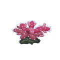 Chili Coral.png
