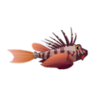 Blackfoot Lionfish (1)