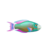 Parrotfish (1)