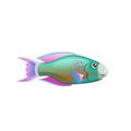 Parrotfish (1).png