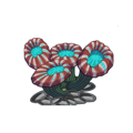 Candy Cane Coral.png