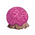 Pink Brain Coral.png