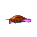 Pink Turtle.png