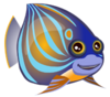Annularis Angelfish (baby)