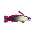 File:Purple Firefish (1).png