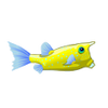Longhorn Cowfish (1)