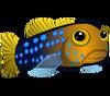 Bluedot Jawfish (baby)