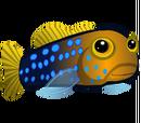Bluedot Jawfish