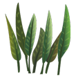 Plant javafern 110x110.png