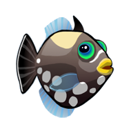 File:Clown Triggerfish (2).png