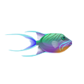 Queen Triggerfish (1).png