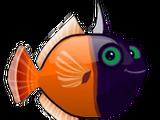 Blackhead Filefish