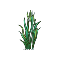Seaweed Bunch.png