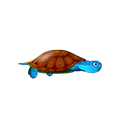 Blue Turtle.png