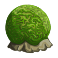 Green Brain Coral.png
