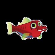Longnose Hawkfish (2)