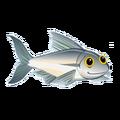 Sardine (2)