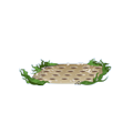 Oyster Bed.png