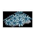 Organ Pipe Coral.png
