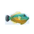 Orangehead Filefish (1).png