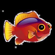Flame Hawkfish (2)