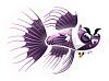 Little-Aquarium-Vampire-Fish-Adult