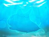 Channel Catfish Fish