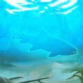 Bull-trout.jpg