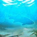 Bull-trout