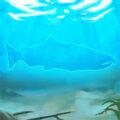 Coho-salmon.jpg