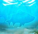 White Bass Fish