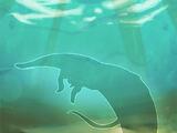 Phanta Ray Fish