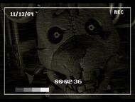 Rat Close to the Camera