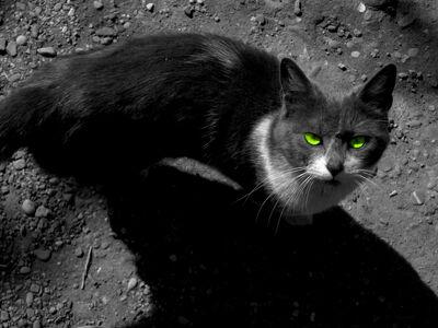 Light in the Dark Cat